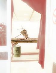 Here is the umbrella - For Rolf GRIPSPIX -   hier mit Schirm (5 Tage früher) (hedbavny) Tags: umbrella schirm regenschirm broken zerbrochen kaputt skeleton skelett barrel fas tonne green grün vorhang molton curtain schwarz black stoff fabrique teppich carpet muster pattern floral ornament sign zeichen rauchverbot red rot tür door türgriff glas glass window fenster mirror spiegel garderobeständer podest tisch table holz wood braun brown beige weis white arbeit work art kunst handwerk probebühne studio occasional random zufall stilllife stillleben installation surreal surrealism aktion zaches zinnober theater theatre wien vienna hedbavny fragil