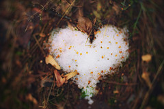 Falling in love (petrapetruta) Tags: snow heart spring ground bokeh swirl ko120m lovepotion flickrfriday