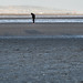 I DECIDED TO VISIT SANDYMOUNT STRAND TODAY [IT WAS A BEAUTIFUL SUNNY DAY UNTIL I GOT THERE]-149142