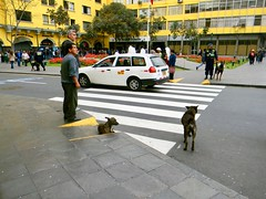 Peru 1 049 (burbadj) Tags: peru dog lima crosswalk