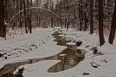 Winter creek (prokhorov.victor) Tags: зима природа пейзаж снег ручей деревья вода