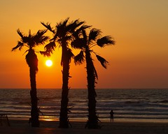 Три пальмы (unicorn7unicorn) Tags: закат солнце дерево пальма море smileonsaturday threesame israel ישראל