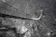 Ponte Tibetano di Carasc (2) (Toni_V) Tags: m2400140 rangefinder messsucher leica leicam mp typ240 type240 28mm elmaritm12828asph hiking wanderung randonnée escursione alps alpen hängebrücke suspensionbridge pontetibetanodicarasc perspective riazzinocurzuttbellinzona bw monochrome blackwhite silverefexpro2 sep2 niksoftware tessin ticino sementina switzerland schweiz suisse svizzera svizra europe bridge brücke ©toniv 2019 190309
