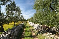 Cammino Materano (santi_riccardo) Tags: puglia camminomaterano