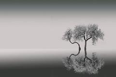 Reflection in Monochrome. (De carrusel) Tags: 2019 agua paisajes varios carrusel