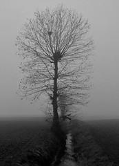 NELLA NEBBIA (ceriz_83) Tags: albero campagna nebbia dicembre inverno tree fog bn bw