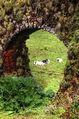 AZORES (toyaguerrero) Tags: azores açores portugal sanmiguel saomiguel nature naturaleza beauty atlanticocean atlántico isle isla toyaguerrero maríavictoriaguerrerocatalán murodocarvao muro das nove janelas
