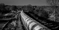 And the going away (Peter Leigh50) Tags: mono monochrome blackandwhite black white cement train trees track railway railroad rail rural countryside shadows shade shadow sunshine sunlight wistow winter fujifilm fuji xt2