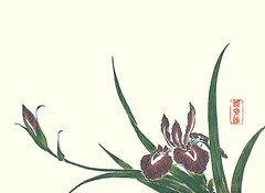 Blood red iris (Japanese Flower and Bird Art) Tags: flower blood red iris sanguinea iridaceae ukiyo woodblock picture book japan japanese art readercollection