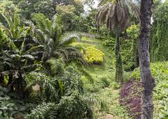Botanical Garden / Ботанический сад (dmilokt) Tags: природа nature пейзаж landscape лес forest дерево tree парк park сад garden dmilokt