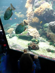 rhenen_2_035 (OurTravelPics.com) Tags: rhenen max with fish coral aquarium ouwehands dierenpark zoo