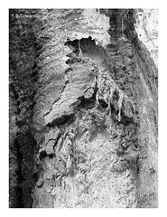 Madera vieja 2. Old wood 2. (Esetoscano) Tags: madera wood árbol tree texturas textures antiguo old bw bn byn monocromo monochrome surrealismo surrealism abstracto abstract esetoscano