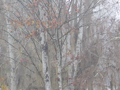 Into the forest (saltlifebeach5443) Tags: landscape woods winter moss nature leaves color white dew fog foggy morning bare branches