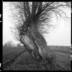 Natur (tiltdesign2016) Tags: ilfordilfosol319 ilfordhp5400asa 400800 analogphotography bw dänemark denmark canoncanoscan9000f mittelformat yashicamat124g kragenæs natur weide