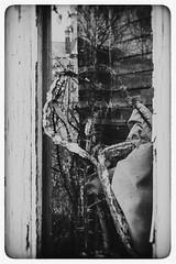 Phaïneïn ou Rendre Visible (Napafloma-Photographe) Tags: 2019 arras architecturebatimentsmonuments artois bandw bw détailsarchitecturaux géographie hautsdefrance métiersetpersonnages natureetpaysages objetselémentsettextures pasdecalais personnes techniquephoto végétaux blackandwhite fenêtre monochrome napaflomaphotographe noiretblanc noiretblancfrance photoderue photographe plantesvertes province reflet streetphoto streetphotography france fr