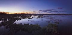 Le marais à l'heure bleue - Arles - (Loïc.Kervignac) Tags: iphone water eau ciel marais arles camargue paysage bluehours heurebleue