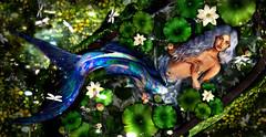 Aquarella (meriluu17) Tags: mermaid scale scales tail fish fishy ocean bath bathtube lotus lotos flower green blue fantasy surreal people portait wild nature flora fauna natural beauty miracle magic magical mersoul merfolk