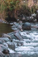 Coyhaique y alrededores (Christopher León Vilches) Tags: rio lago atravesado chile coyhaique paisajes patagonia aysén