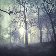 veins (Dyrk.Wyst) Tags: germany park wupertal atmosphere backlight baretrees beechtrees fog foliage forest forestfloor landscape light mood morning nature sunrise trees agentur