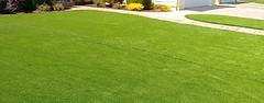 Artificial Grass (wmlandscaping007) Tags: artificial grass installation newark