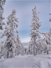 Ylläs_93179 (uwe_cani) Tags: panasonic g9 finnland finland skandinavien scandinavia lappland lapland ylläs yllästunturi ylläsjarvi winter schnee snow natur nature outdoor landschaft landscape bäume trees wolken cloud blauerhimmel bluesky spuren tracks