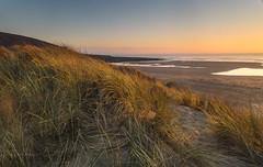 Golden grass. (Through Bri`s Lens) Tags: northdevon croydebay sanddunes grasses beach sunset colours thepoint downendpoint brianspicer canon5dmk3 canon1635f4