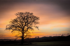 Sillhouette (Jez22) Tags: lone lonely tree field sundown sunset fadinglight color colour bright orange dusk rural kent england woodchurch branches sillhouette copyright jeremysage