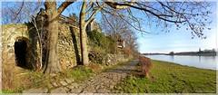Elbufer in Leckwitz (Christoph Bieberstein) Tags: deutschland germany sachsen saxony europa europe elbe fluss river leckwitz elbradweg elbufer