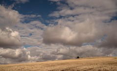 quiet but for the wind and rustling of the grass... (Alvin Harp) Tags: october 2018 oregon pendleton scenicviewpoint i84 cabin cloudsstormssunsetssunrises sonyilce7rm3 fe2470mmf28gm cumulusclouds fields mountaintop alvinharp