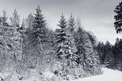 Taunusimpressionen (nordelch61) Tags: deutschland hessen heimat mittelgebirge feldberg oberursel winter schnee wald frost bäume blätter taunus baum holz himmel landschaft