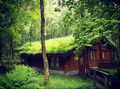Green Green Grassy Roof.. (R1GHT 4NGLE Photography) Tags: logcabin log cabin woods green ferns grass r1ght4ngle otley chevin country park glasgow photographer phonephotography samsungs9 s9 forrest tree forest leaves sky love like photooftheday photoworld flickrpic style live hello streetphotography samsung
