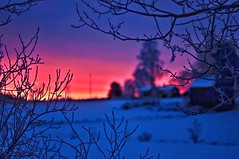 The last sunrise (Stefano Rugolo) Tags: stefanorugolo pentax k5 pentaxk5 smcpentaxm100mmf28 kmount ricohimaging morning sunrise depthoffield trees branches barn 31december2018 2018 countryside colors landscape bokeh sky hälsingland sweden manualfocuslens manualfocus manual vintagelens snow winterscene winter newyear