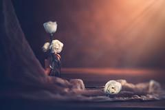Lisianthus (Ro Cafe) Tags: edge80 lensbaby lisianthus sonya7iii stilllife darkmood gauze littlebottle whiteflowers romantic