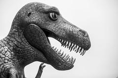 Tell Me a Story TRex (Thomas Hawk) Tags: america oregon oregoncoast portorford prehistoricgardens usa unitedstates unitedstatesofamerica bw dinosaur us