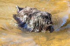 20190215-IMG_8701 (Alderbabbsack) Tags: struppi hund