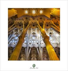 Amarillo (alcachofa1960) Tags: sagradafamilia barcelona cataluña modernismo gotico antonigaudí luz tarde