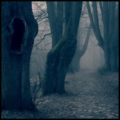 a silent voice (luci_smid) Tags: trees impression monochrome