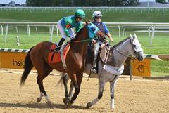 "2017-09-09 (17) r4 Jenn Miller on #7 Crossing the Blues (JLeeFleenor) Tags: photos photography md maryland marylandracing laurelpark equine marylandhorseracing jockey جُوكِي ""赛马骑师"" jinete ""競馬騎手"" dżokej jocheu คนขี่ม้าแข่ง jóquei žokej kilparatsastaja rennreiter fantino ""경마 기수"" жокей jokey người horses thoroughbreds equestrian cheval cavalo cavallo cavall caballo pferd paard perd hevonen hest hestur cal kon konj beygir capall ceffyl cuddy yarraman faras alogo soos kuda uma pfeerd koin حصان кон 马 häst άλογο סוס घोड़ा 馬 koń лошадь outside outdoors"