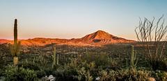 Morning in the Desert (Buck--Fever) Tags: morning sunrise desert saguaro landscape arizona arizonadesert arizonawonders outdoors arizonaoutdoors centralarizona florencekelvinhighway