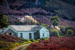 cliff road house cl (Mallybee) Tags: mallybee alderney cliff cottage heather house road fuji fujifilm xt10 colourful xc apsc xmount xtrans 50230mm f4567 ois fujinon flora outside