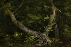 Still life in the woods.... (Marijke M2011) Tags: atmosphere amsterdamsebos amsterdam stilllife wood green nature netherlands mooywerk mooy marijkemooyphotography