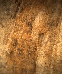 1552668926.692652 (jgdav) Tags: ancient quartz pigment ochre image micro pictograph blue america rock