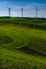 Windmills II (Perry J. Resnick) Tags: 2017 pjresnick palousewa perryjresnick pjresnickgmailcom pjresnickphotographygmailcom ©2017pjresnick ©pjresnick 56mm fujinon56mmf12 56mmf12 nature light fuji fujifilm atmosphere atmospheric digital shadow texture shadows yellow angle perspective white xf fujinon resnick outdoor green brown orange rectangle rectangular color colour sky clouds blue xpro2 fujifilmxpro2 grass drama windmill field windmills jettrail evening sunset sundown
