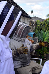 DSC_9750-61 (jjldickinson) Tags: 107d3300 nikon1855mmf3556gvriiafsdxnikkor promaster52mmdigitalhdprotectionfilter longbeach bixbyknolls longbeachbeekeepers outreach class beeprepared insect bee honeybee apismellifera hive hiveinspection dickbarnes jenniferduke