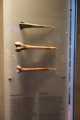 New Guinea bone trophies (quinet) Tags: 2017 amsterdam antik netherlands tropenmuseum ancien antique museum musée