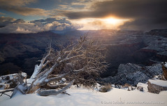 Perseverance (David Swindler (ActionPhotoTours.com)) Tags: arizona grandcanyon snow southrim winter sunburst