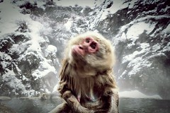 (hiderocket) Tags: jigokudani 地獄谷野猿公苑 snowmonkeys