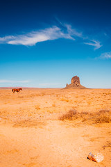 Wild Horse in the Wild West (Ida H) Tags: usa america americannature wildwest horse wild remote monumentvalley wilderness outdoors nature landscape desert desertlandscape blue sky bluesky sunny afternoon summer summerskies rock sandy nikon nikond810 sigmaart sigma 24mm