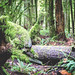 Cathedral Grove [1]