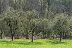 An der Wupper (3) (Pippilotta aus dem Tal) Tags: sel90m28g